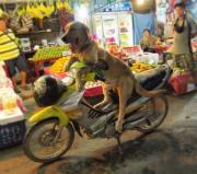 vietnam imagini 2