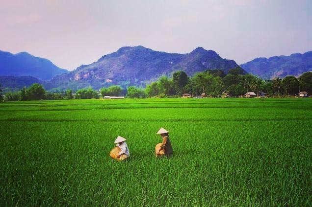 vietnam in imagini
