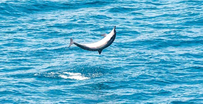 Dolphin cruise in Goa