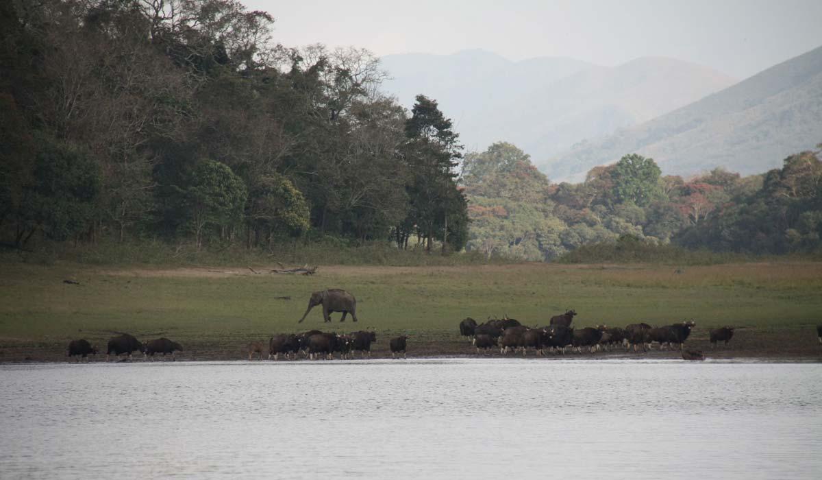 Elephant Lake in Munnar