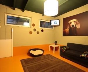 Hotel de lux pentru câinii şi pisicile românilor