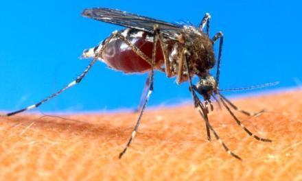 Țările în care poți să te infectezi cu virusul Zika