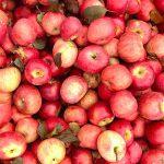 apple picking sperryville virginia romiyo