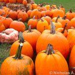 orange picking sperryville virginia romiyo