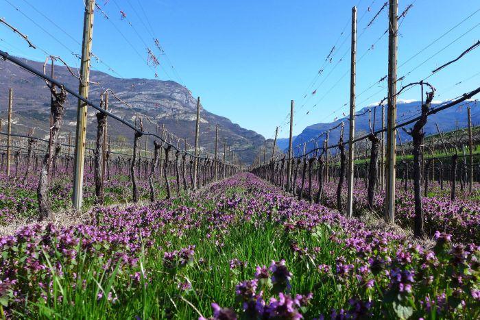 Trentino Alto Adige Immobili In Vendita Chalet E Case Di