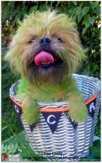 Pet Paint Halloween Costumes - ROMP Italian Greyhound ...
