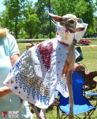 38 Italian Greyhound Halloween Costumes