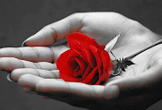 Photo of A csodás rózsa