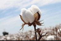 Photo of Mi köze van a tamponnak  Monsantohoz?