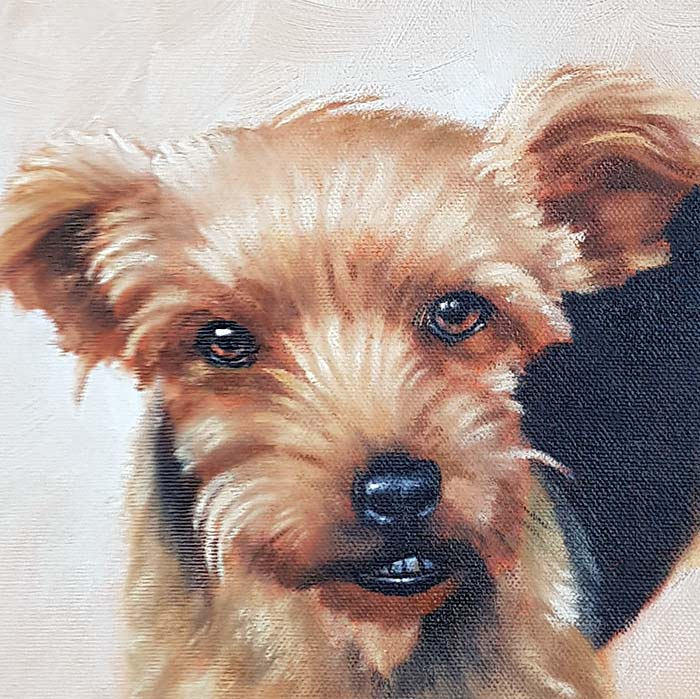 Pippin - Detail - Pet Portrait