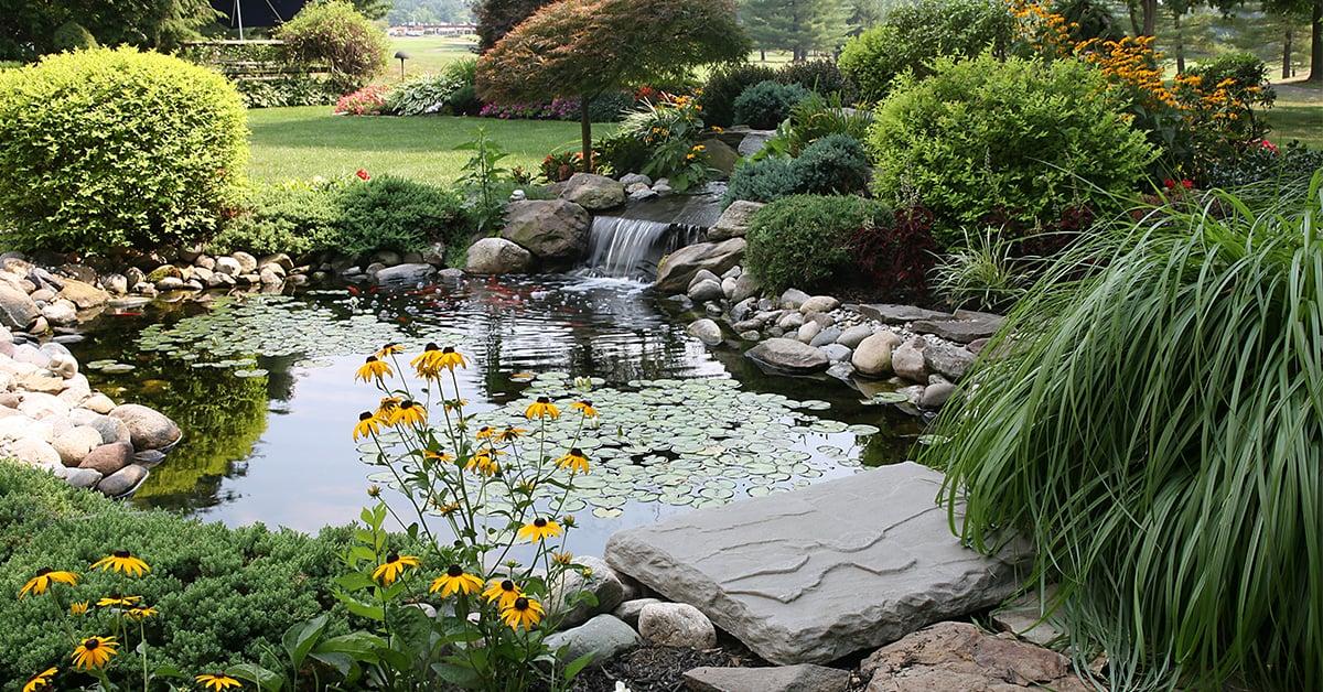 amenager un jardin aquatique rona