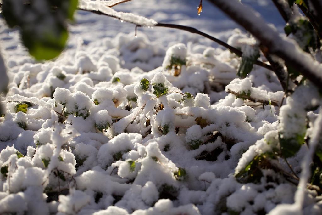 Ronald de Jong fotografie _ Winter 30-01-2015 009