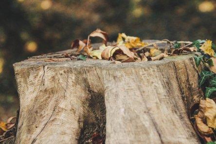 slender shoot from a stump