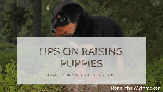 tips on raising puppies