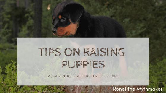 tips on raising puppies