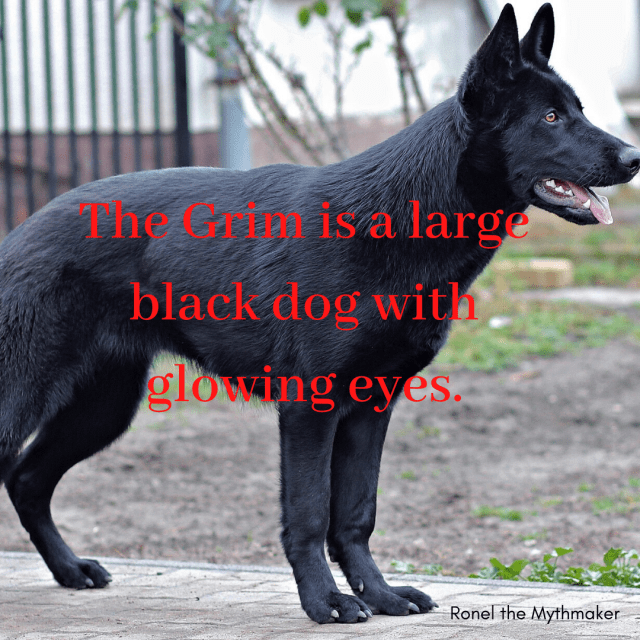 grim is a large black dog