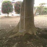 木に作られたブランコ