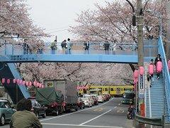 桜並木と西武新宿線