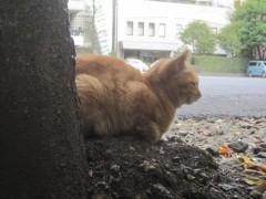 猫がじっと何かを見ていた