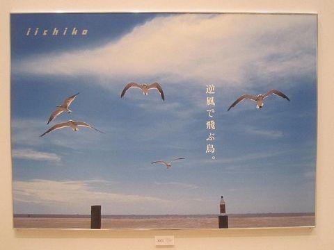 逆風で飛ぶ鳥。