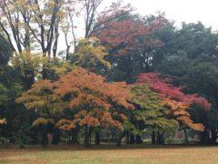 随分色づいている木も・・・