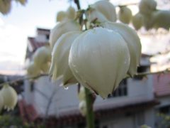 沖縄ではいろんな花に出会えた