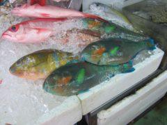 あまり美味しそうに見えない魚も…