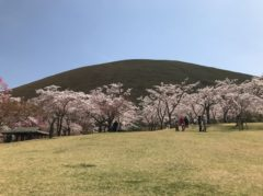 大室山と桜