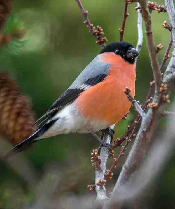 Bullfinch Roomy Home coral colour inspo portrait image