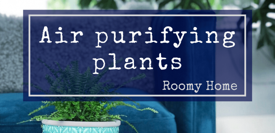 air purifying plants Roomy Home swiss cheese plant