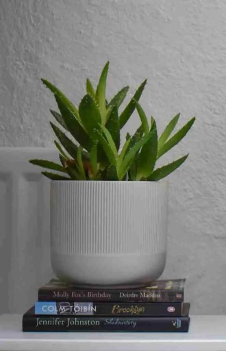 air purifying plants aloe vera