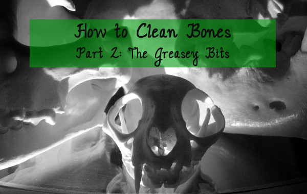 how to clean bones tutorial part 2