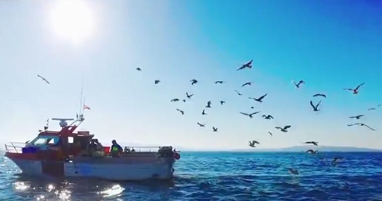 Faciles Recetas De Pesca Do