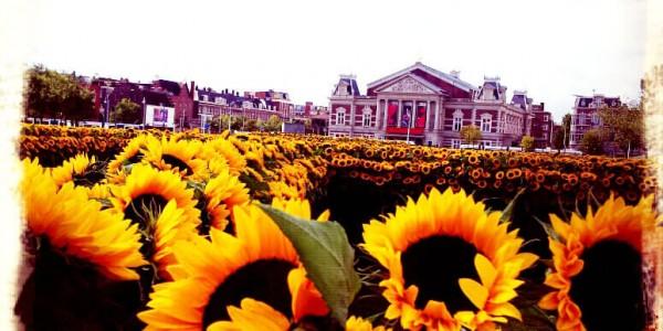 van_gogh_museum_zonnebloemen_labyrint _concertgebouw