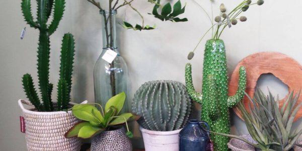 vtwdbeurs_eijerkamp_cactus