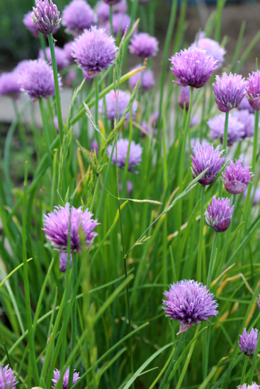 Garten Grün Natur Kinder Waldorf Kräuter Blumen