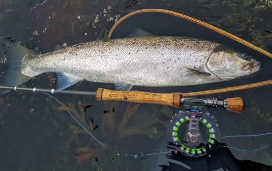 Her har jeg fiske sjøørret om våren. Flott sjøørret som tok en vaskebjørn. Hvaler tidlig i mars.