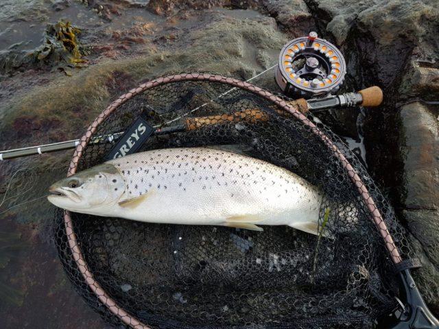 Sjøørret fisket på vinteren. Hvaler.