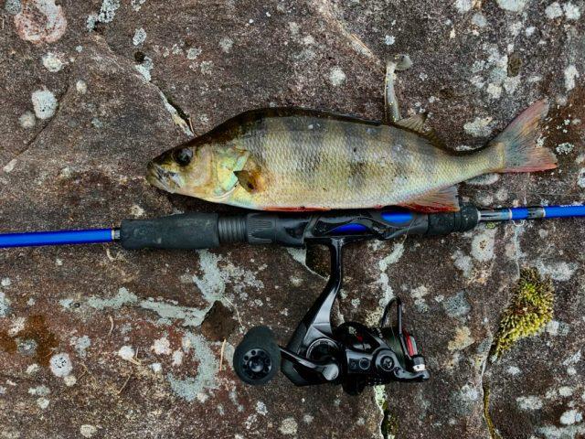 Bjørn Tore Kjølholt fisker abbor på Hvaler. Her tester jeg en ny fiskestang fra savage gear.
