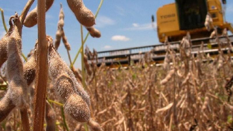 Resultado de imagen para Sube la soja y el maíz se disparó al máximo valor en siete años
