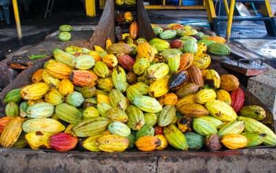Le cacao, un univers à part entière…