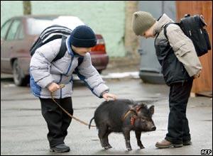 ukraine_pig (16k image)