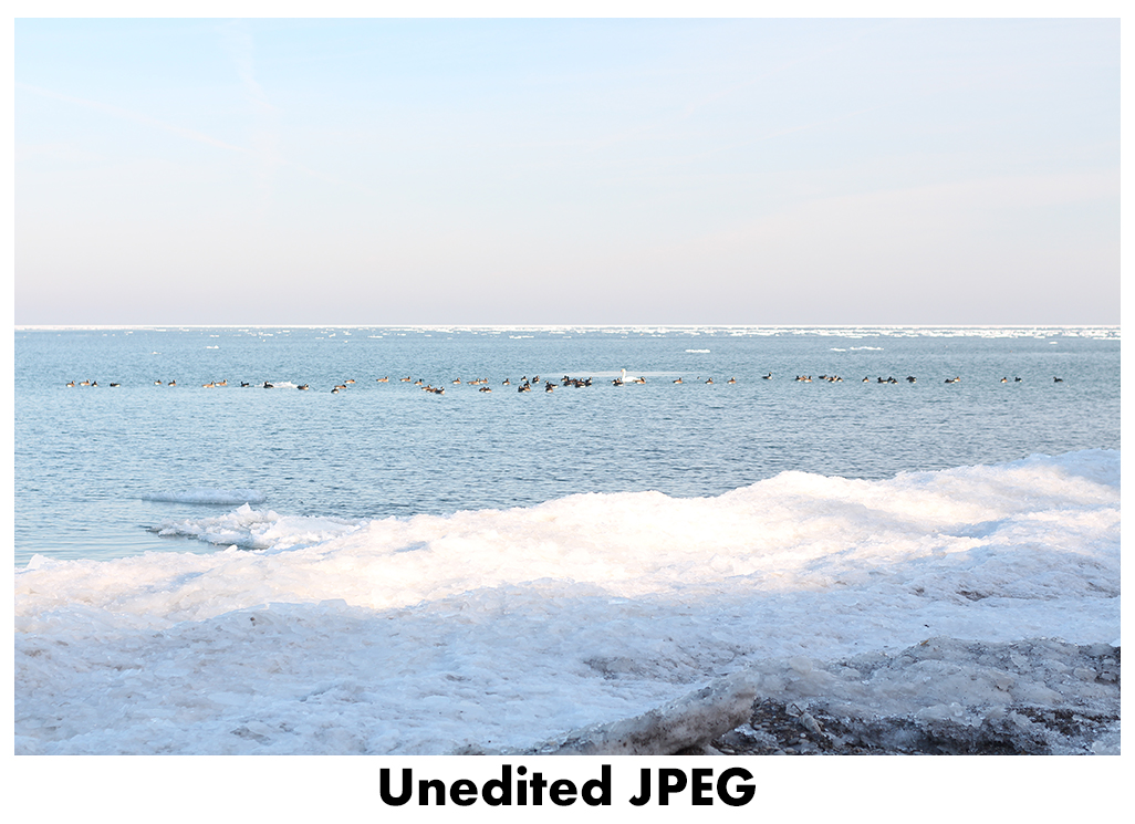 JPEG vs RAW - Unedited JPEG | http://www.roseclearfield.com