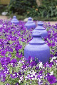 Mitchell Park Domes Ultra Violet Summer Floral Show | https://www.roseclearfield.com