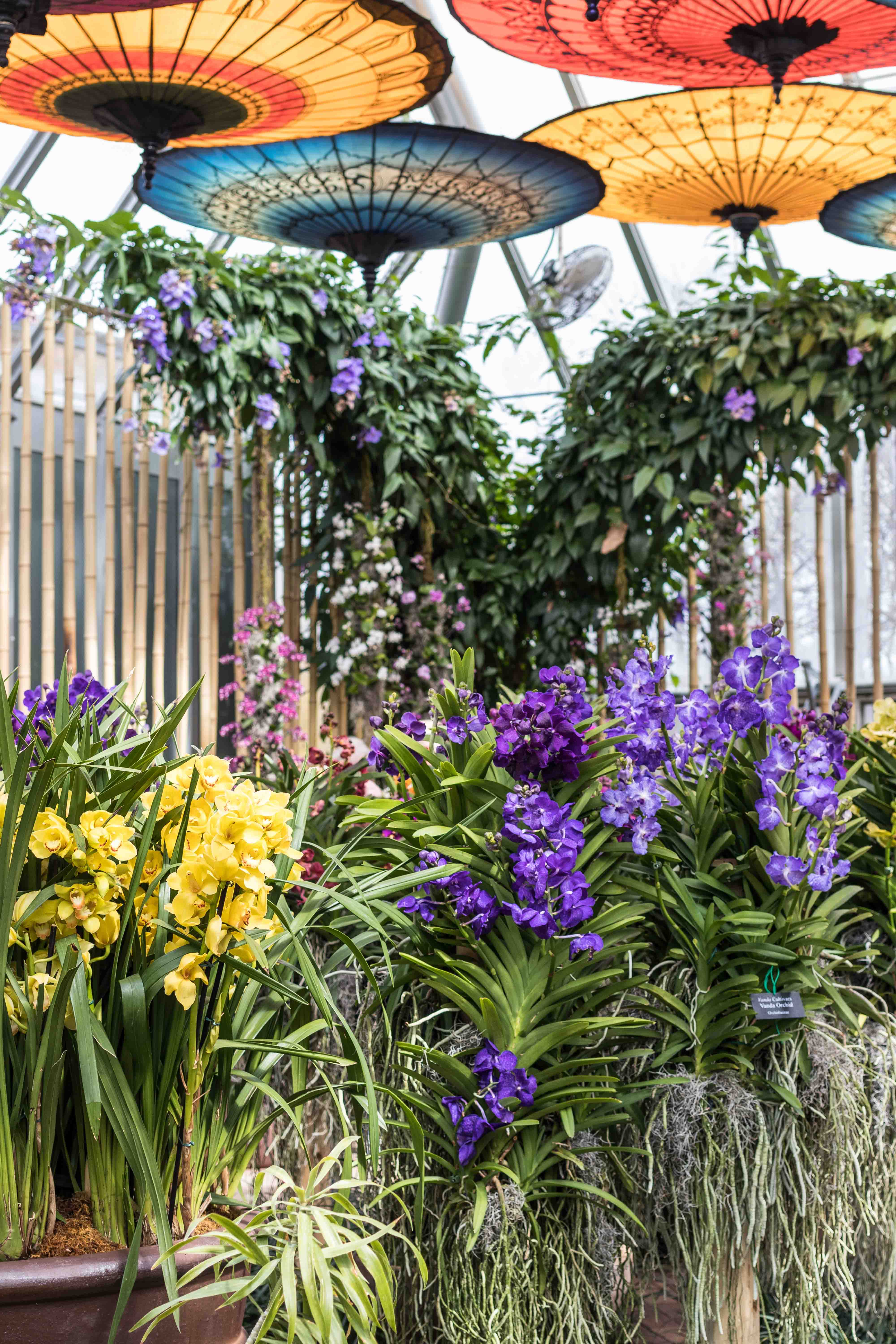 Asia In Bloom The Orchid Show At The Chicago Botanic Garden Rose Clearfield
