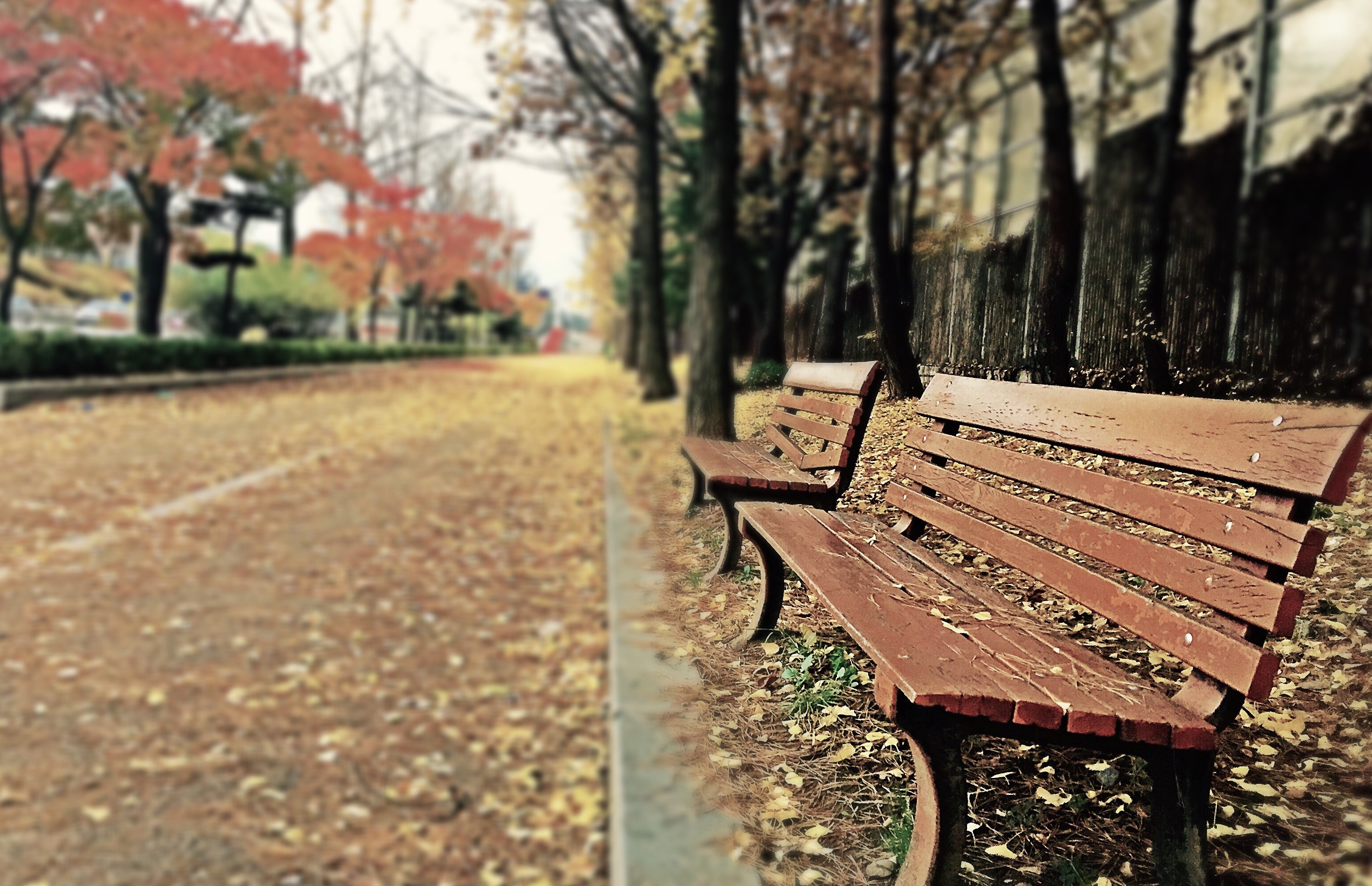 20 Creative Fall Photography Ideas - Brown Wooden Bench with Brown Dried Leaves by Zino Bang via Pexels | http://www.roseclearfield.com