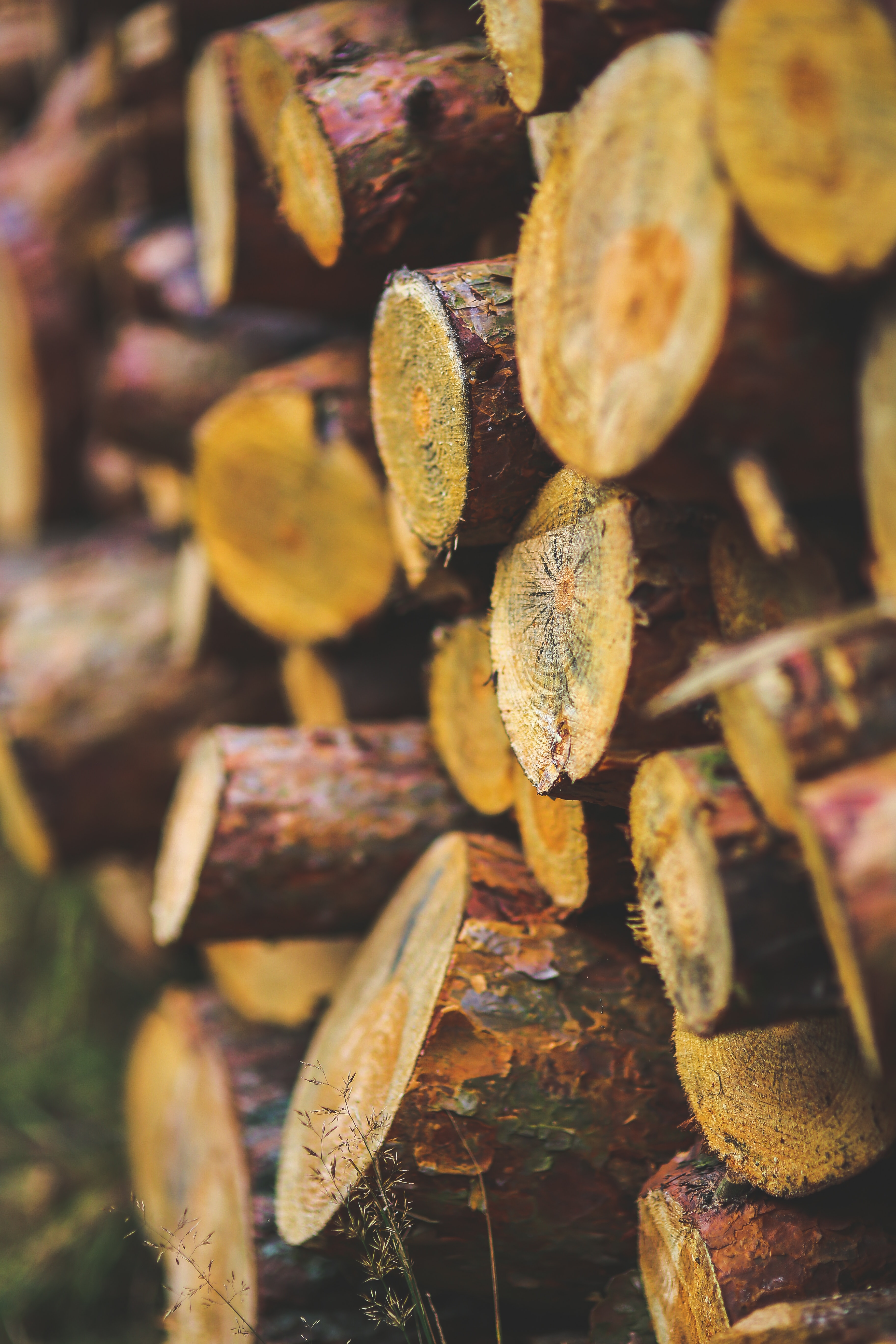 20 Creative Fall Photography Ideas - Cut Wood for the Winter via Pexels | https://www.roseclearfield.com