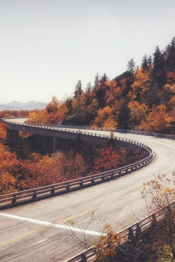 Fall Photo Inspiration - Road Winding Through Fall Trees | https://www.roseclearfield.com