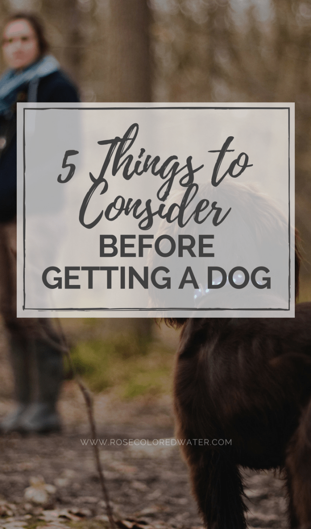 5 Things to Consider Before Getting a Dog | Rose Colored Water #pets #dogs #adoption