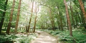woodland burial ground